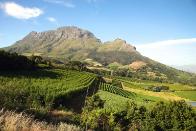 Western Cape wine harvest smaller, but better
